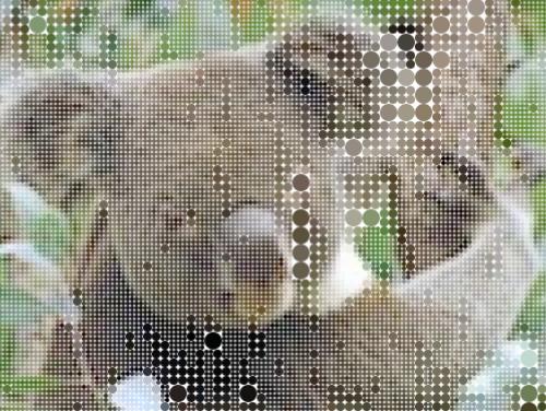Image+from+koalastothemax.com